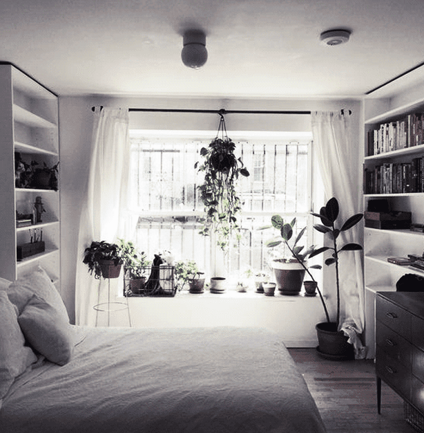 Choose unique plants and flowers to give your dorm space an alternative style.