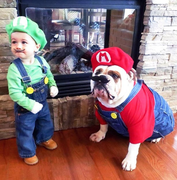 Unique Costume Idea - Bring Your Pet Into The Fun!