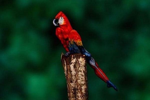 human parrot