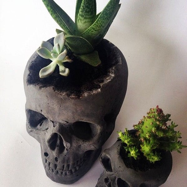 cool potted plants