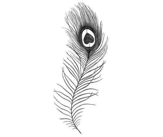 Peacockfeather_1_(8x3cm).jpg
