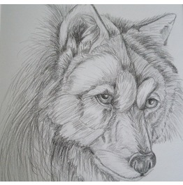 Wolf Drawing, Original Fine Art Nature Rustic Animal