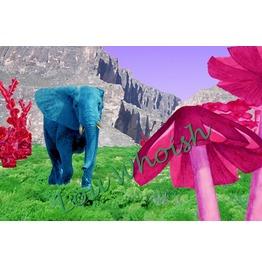 One Eared Elephant Mushroom Paradise