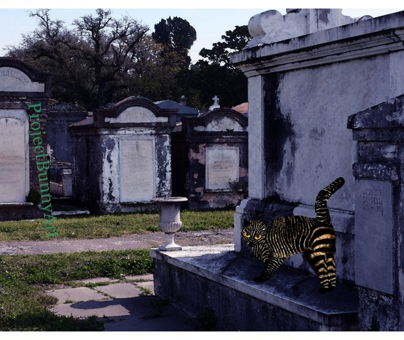 graveyard_zebra_kitty_mixed_media_artprints_2.jpg