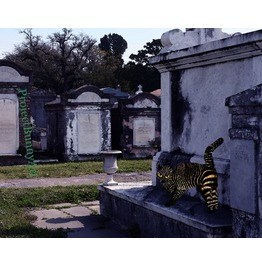 Graveyard Zebra Kitty Mixed Media