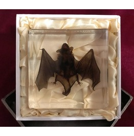 Real Bat In Acrylic Block