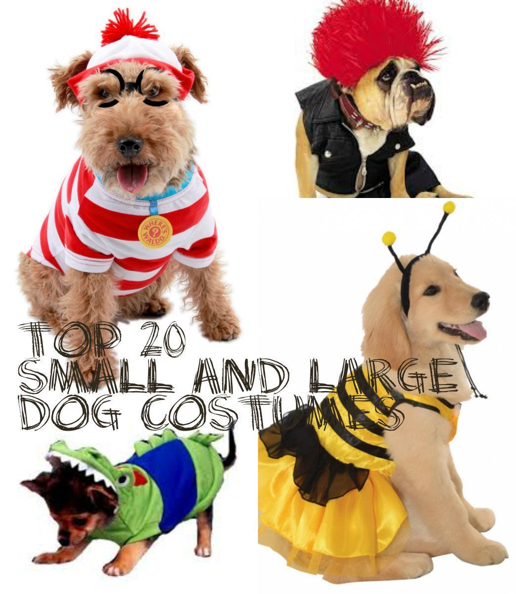 Top 20 best small and large dog costumes