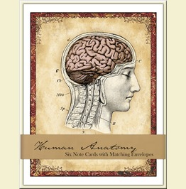 Human Anatomy Boxed Card Set Six Blank Cards With Matching Envelopes