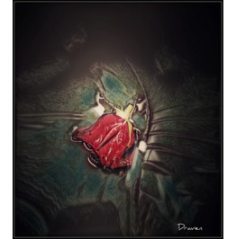Under The Rose 20x24 Canvas Print