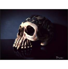 Skull 20x24 Canvas Print