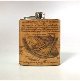 Vintage Anatomy Flask : Vagina And Neighboring Parts