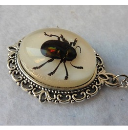 Beetle Taxidermy Necklace, Insect, Horror, Curiosities, Insect, Witch