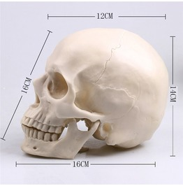 Dark Forest Lifesize Human Skull Home Decor Medical Model Accessories