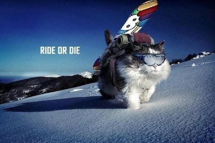 Snowboard Ride or Die Cat
