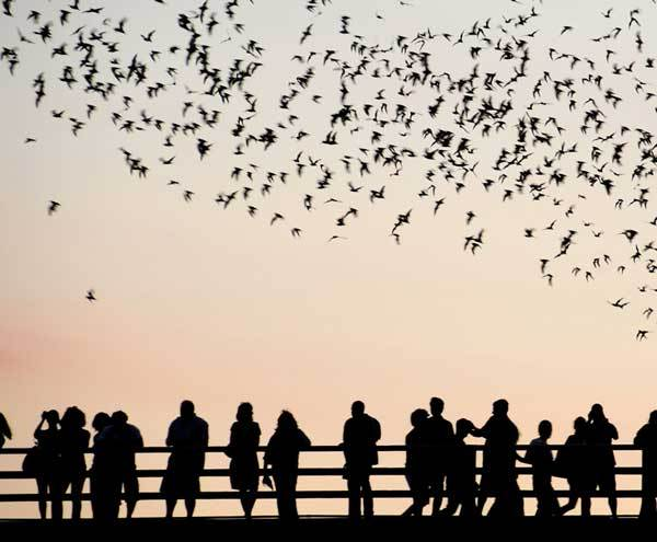 10 Alternative Vacation Ideas for Your Inner Goth: Bats in Texas