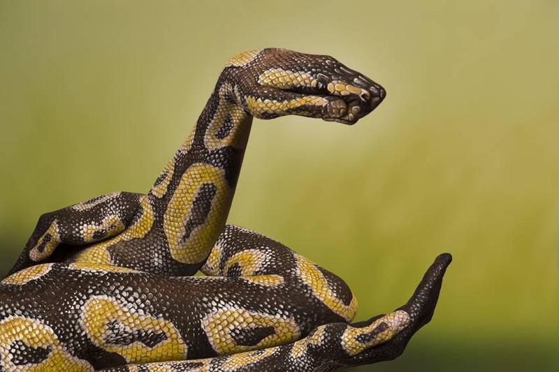 Craig Davies 3 D Snake Boa Body art